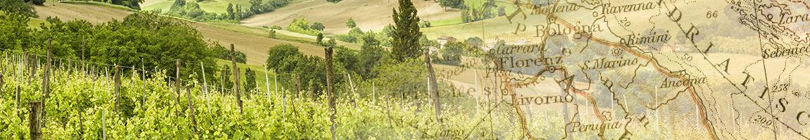 fine wines from friuli venezia giulia